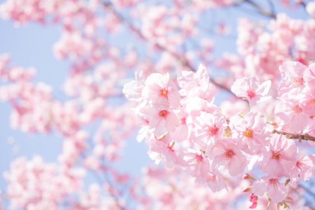 春おすすめバイトランキング